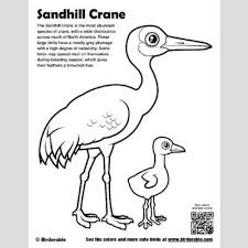 Small Picture Cute Bird Coloring Pages page 2 by Birdorable Free Downloads