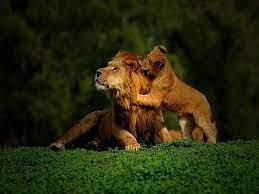 Baby animals ...
