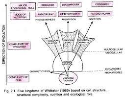Five Kingdom Classification Chart Five Kingdom Classification Of Organisms