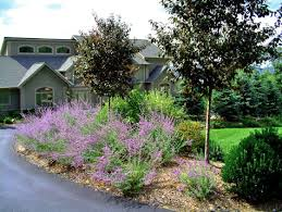 Asphalt driveway entry with an allee of trees and Russian Sage