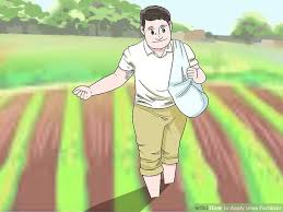 How To Apply Urea Fertilizer 14 Steps With Pictures Wikihow