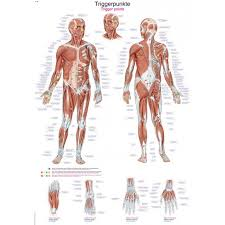 Muscle Pressure Points Chart Poster Trigger Points