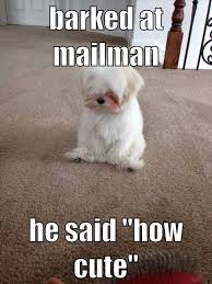 cute dog quotes and sayings. Wonderful Sayings Barked At The Mailman Funny Cute Memes Adorable Dog Pets Meme Lol  Quotes Sayings Humor Pictures Animals Dogs Funnydogs   Throughout Cute Dog Quotes And Sayings E