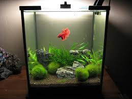 fish tank lighting ideas. Betta Fish 5 Gallon Tank Setup: Desktop Cube Lighting Ideas