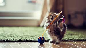 top cute cat hd wallpaper
