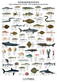 Norwegian Fish Shellfish Poster