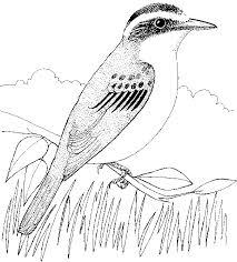 Greta Blu Stampa Colora Disegni Di Animali Ed Uccelli Da