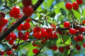 Solving Fruit Tree Blooming U0026 Bearing Problems  Stark Brou0027sTree Bearing Fruit