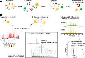 About Can Proteomics Platelets Us What Tell Research Circulation