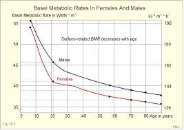 Basal Metabolic Rate Bmr Chart Why Exercise Is Ineffective For Fat Loss Mission Org Medium