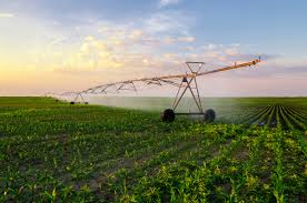 California Crops Irrigated With Toxic Wastewater For 30 Years