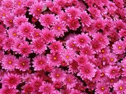 Wallpaper Gambar Bunga Pink Beautiful Flowers 45291