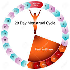 Period Cycle Chart An Image Of A Menstrual Cycle Chart