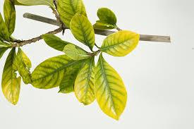 Plant Nutrient Deficiency Chart Identifying Nutritional Deficiencies In Backyard Plants