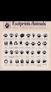 Pin by Vicki Arnold Ashley Schirmer on Preppers   North american animals,  Animal footprints, Bear deer