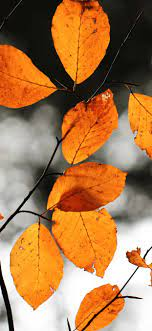 Autumn Foliage Lockscreen - KoLPaPer ...