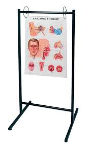 Portable Anatomical Chart Stand Holds Up To 25 Anatomical Charts