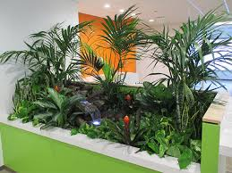 interior landscaping office. Tropical Stream Interior Landscape Project Landscaping Office