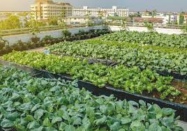 the world s largest rooftop urban farm
