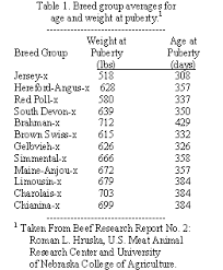 Cow Weight Chart Cattle Today Selection And Development Of Replacement