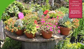 welcome to calverton s full service nursery and landscaping