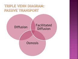 Venn Diagram For Osmosis And Diffusion Osmosis Vs Diffusion Venn Diagram Under Fontanacountryinn Com