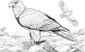 American Bald Eagle Coloring Page Free Printable Coloring Pages