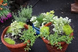 Image result for Christmas Herb Arrangement with Bells