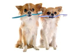 Image result for february dental health month pets