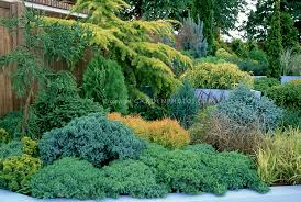 Small Picture Evergreen shrub garden on hill slope with Conifers evergreens