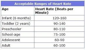 Normal Heart Rate According To Age Normal Pediatric Heart
