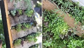 plastic sri diy garden shark herb pictures vertical wall plants bunnings metal retaining planters images pots