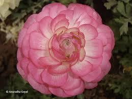 flowers of delhi at garden of senses a photo essay inditales