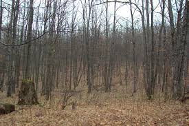 deciduous trees definition types and