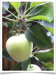 apple malus domestica identification