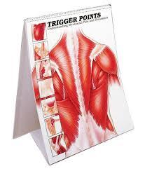 Anatomy Flip Charts Trigger Point Flip Charts Anatomical Charts Sku Fltrg