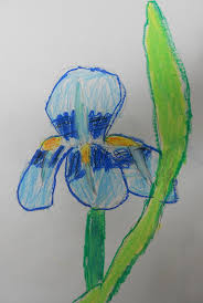 the following is a van gogh irises art lesson plan for 2nd grade made with oil pastels it is an art lesson on drawing an iris with reference to van gogh s