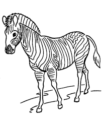 Small Picture Zoo animal coloring page Zebra with stripes Zebra Pinterest