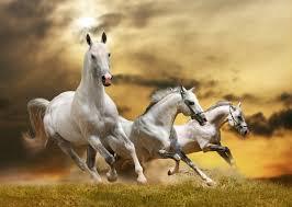 wild white horses running free. Unique Horses White Horses Running Free  Photo12 For Wild Horses Running Free C