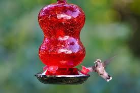 ed glass hummingbird feeder