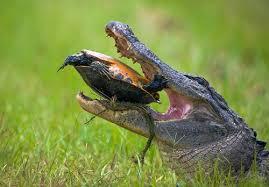 صور طبيعة مع الحيوانات images?q=tbn:ANd9GcT