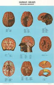 Kwwl Chart Vintage Chart Of The Human Brain Amazon Com Industrial