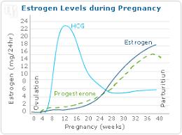 Estradiol Levels During Pregnancy Chart Estrogen Fluctuation Hormonal Balance Hormone Balancing