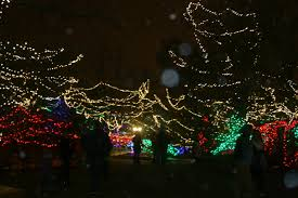 Indianapolis Zoo Lights Review Christmas At The Indianapolis Zoo