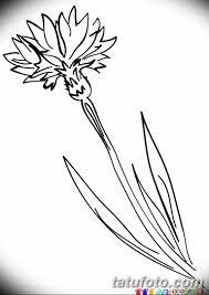 эскиз для тату цветок василек 31052019 002 Sketch Tattoo
