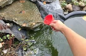using hydrogen peroxide to kill pond algae
