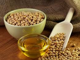 Image result for picture of soybean