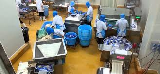 Fish Balls Processing Machines Line For Quality Fish Ball