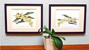 Orchid Wall Art Prints Vintage Botanical Illustrations