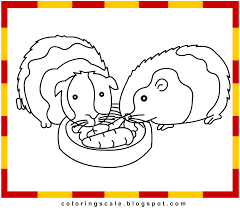 Small Picture Fancy Guinea Pig Coloring Pages 42 With Additional Coloring Pages